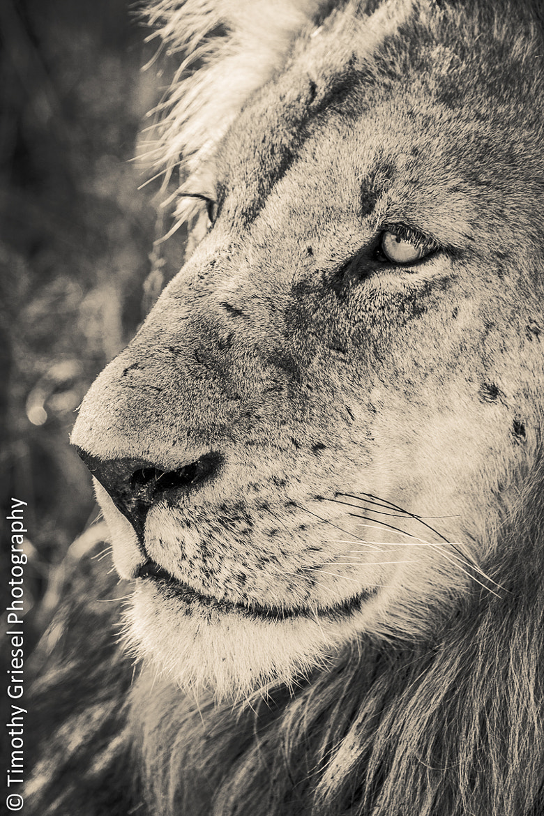 Photograph Male Stare by Timothy Griesel on 500px