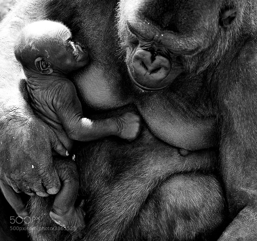 Photograph Mother and Baby by Mike Sewell on 500px