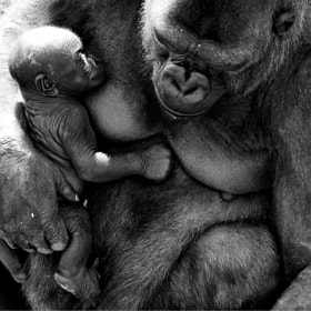 Mother and Baby by Mike Sewell (mikeysewell)) on 500px.com