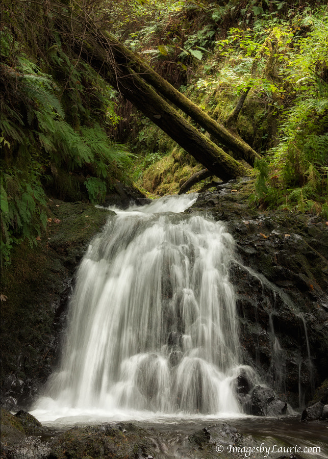 been there to capture it. (One of the many waterfalls along the Columbia River Gorge taken several months ago.)