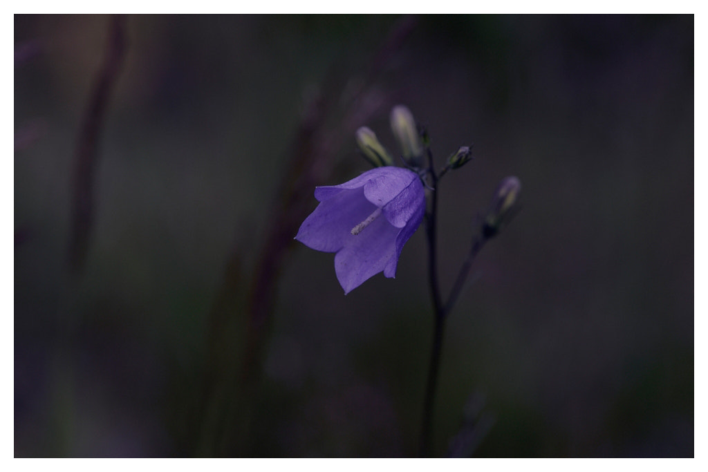 Photograph Bluebell... by Almqvist Photo on 500px
