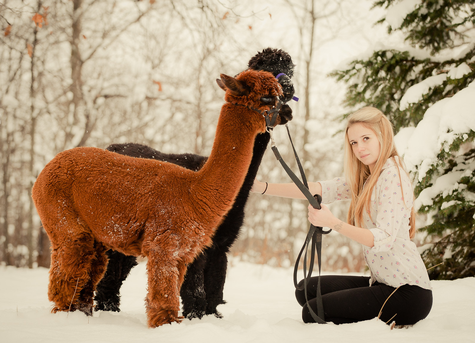 Photograph alpacas by brockit on 500px