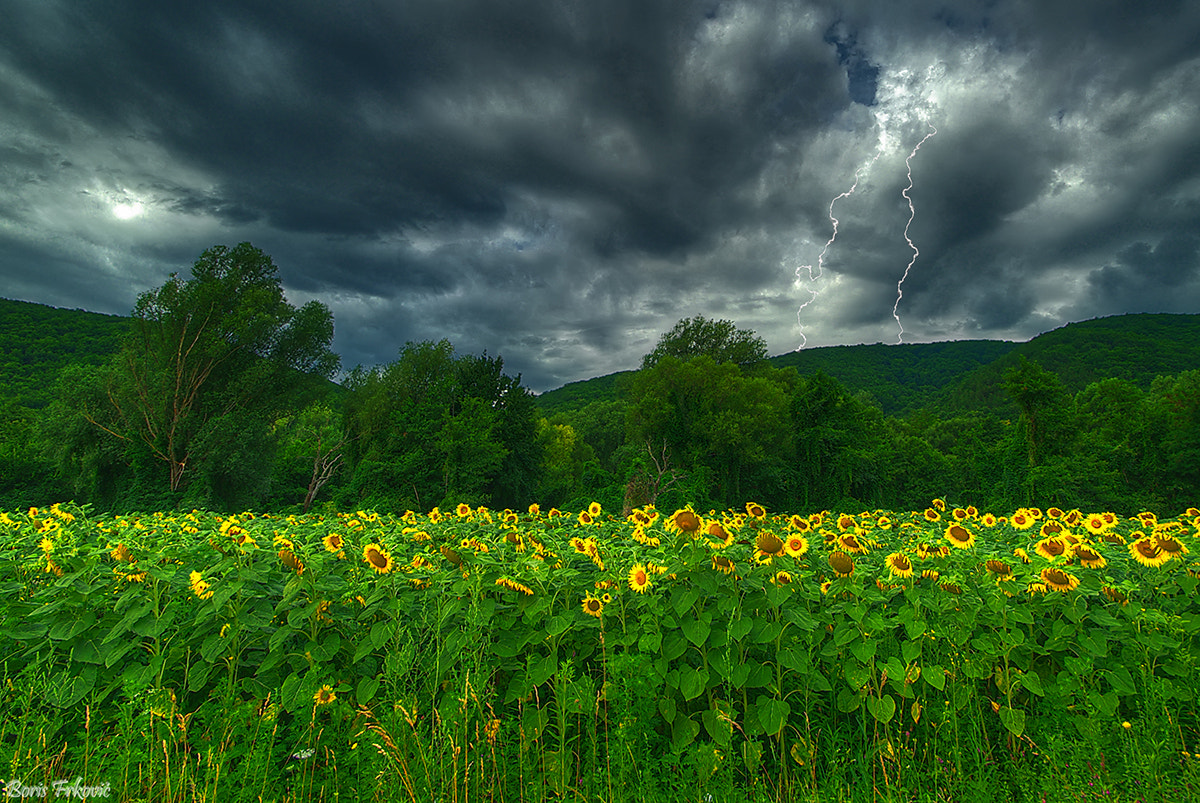 Photograph Storm in the field by Boris Frkovic on 500px