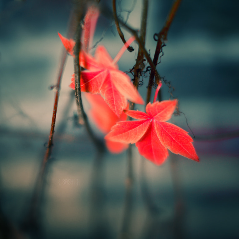 Photograph Little Red for Christmas by Alex Arnaoudov on 500px
