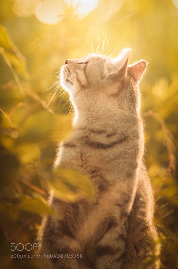 Photograph Save A Prayer by Seiji Mamiya on 500px