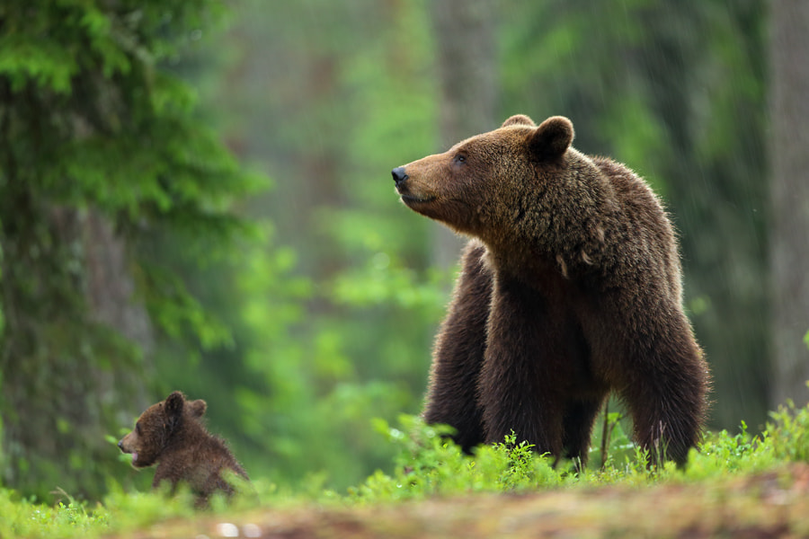Photograph Mother and me by Marcin Nawrocki on 500px