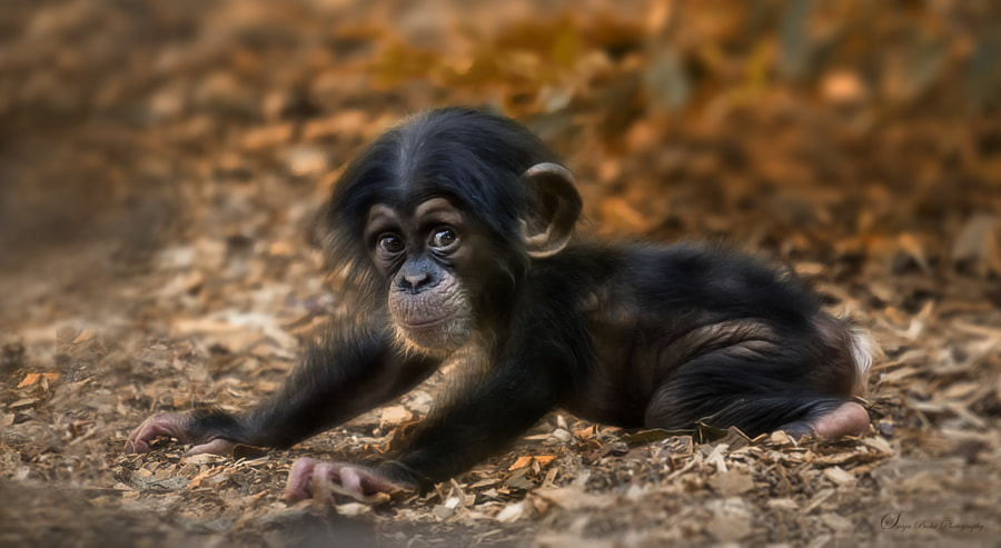 40 Baby Animals Spotted In The Wild - 500px