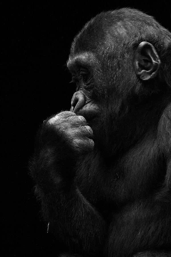 Photograph The Thinker by Andrés López on 500px