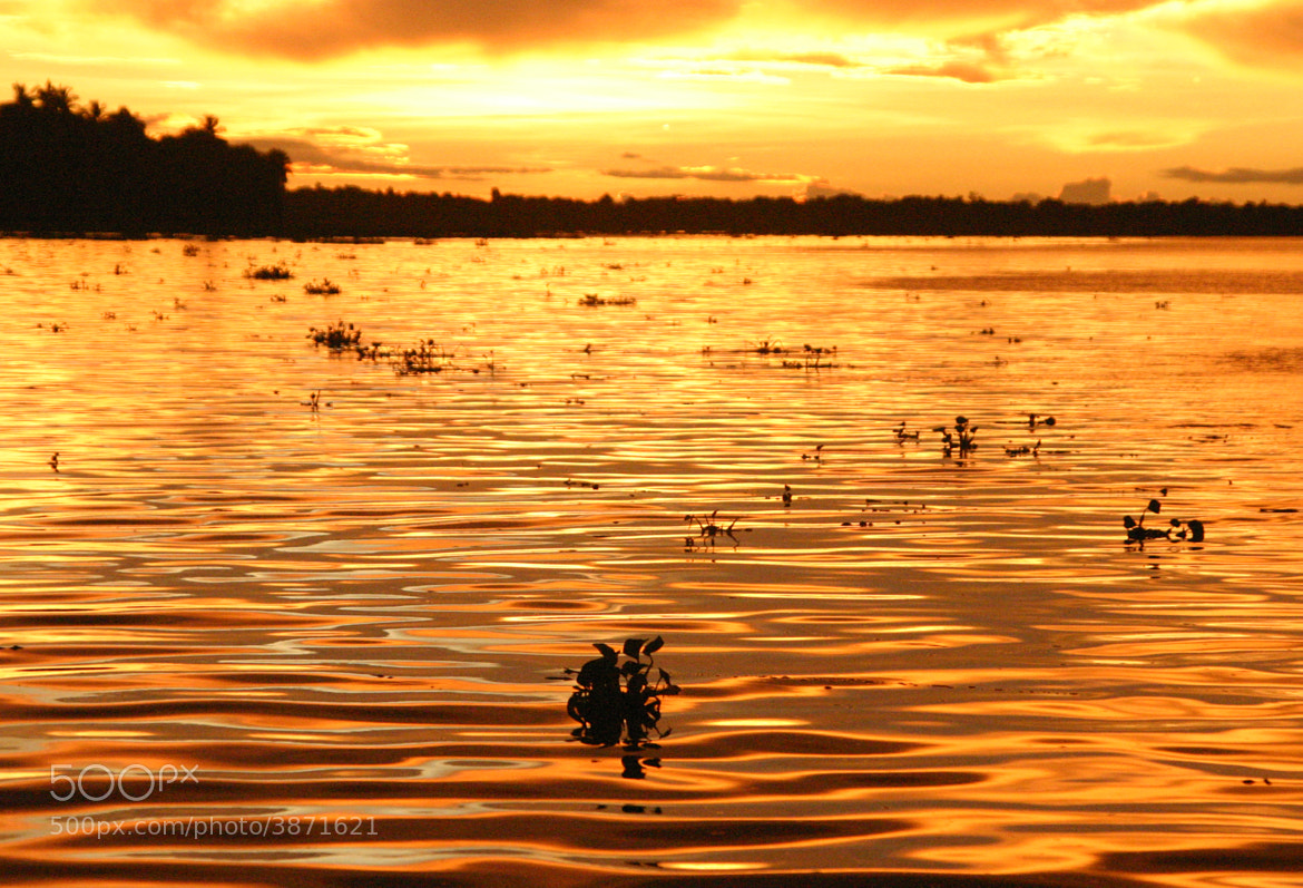 Photograph Orinoco river. Summer 2005 by Jose Dey on 500px