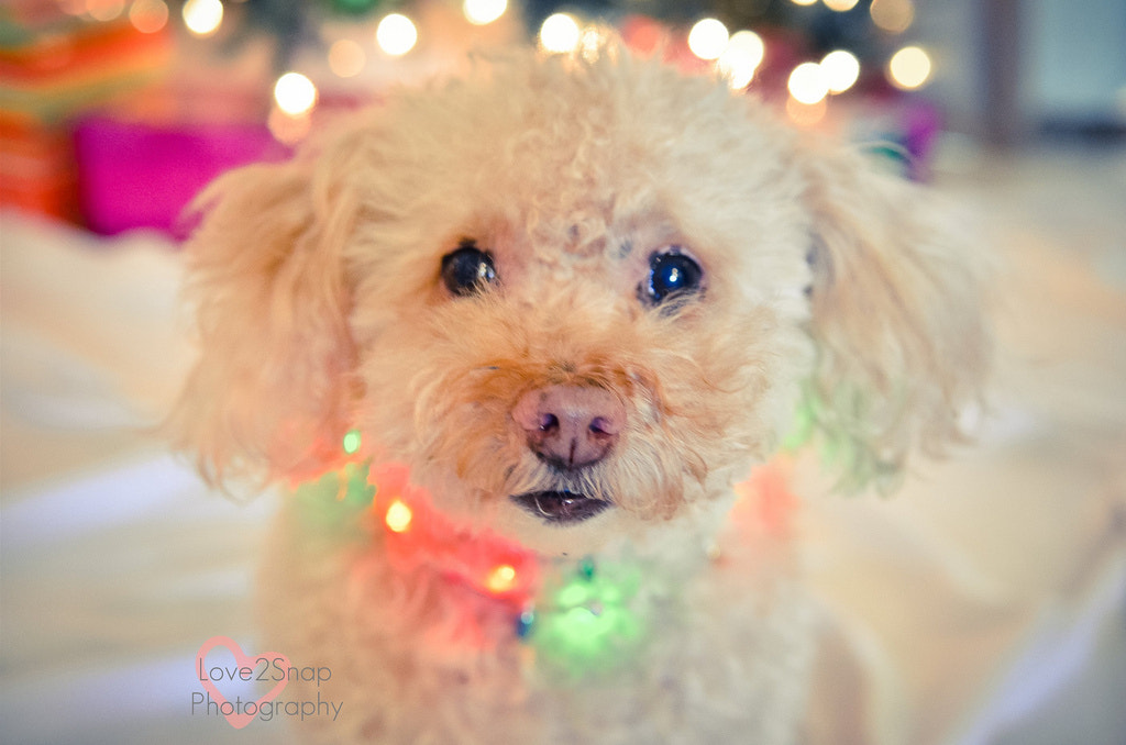 Photograph Happy Holidays!!! by Jessica McDade on 500px