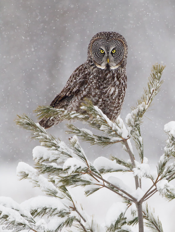 Photograph Stare Down by Axel Hildebrandt on 500px