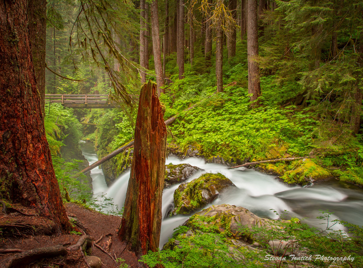 Photograph Sol Duc Falls View by Stevan Tontich on 500px