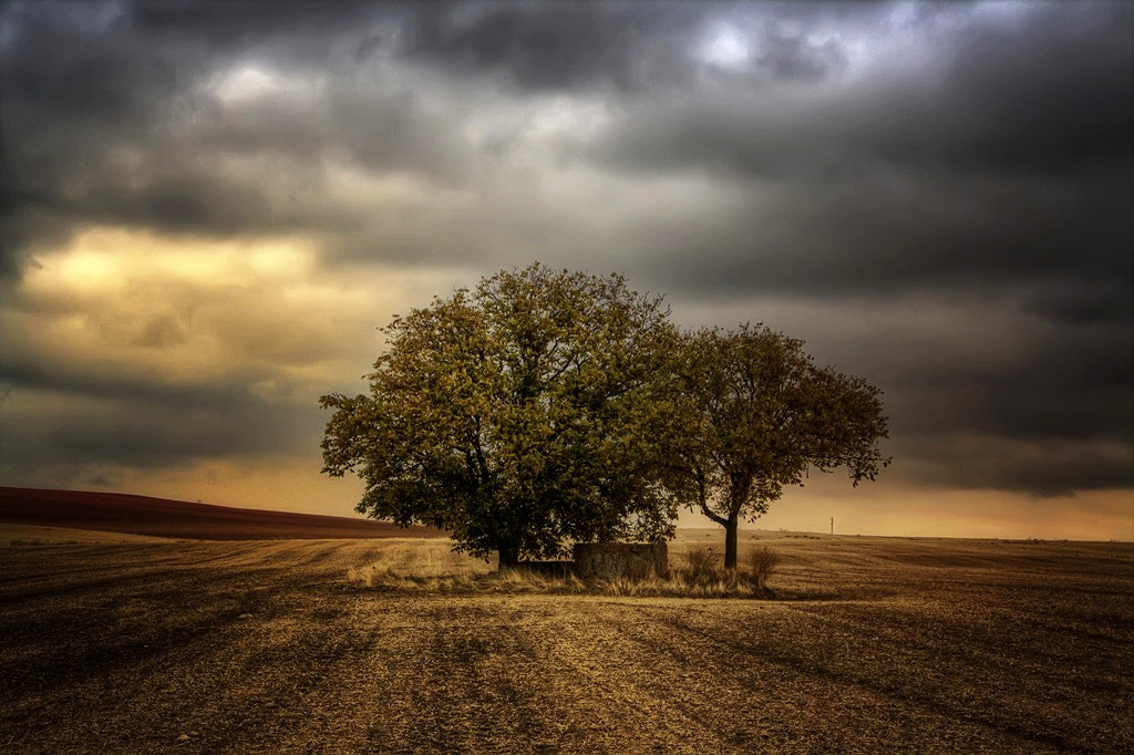 Photograph Field by Isidoro M on 500px