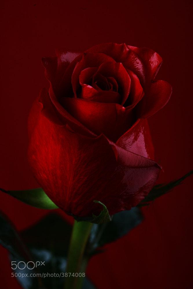 Photograph Secret Love by Hamad Al Naemi on 500px