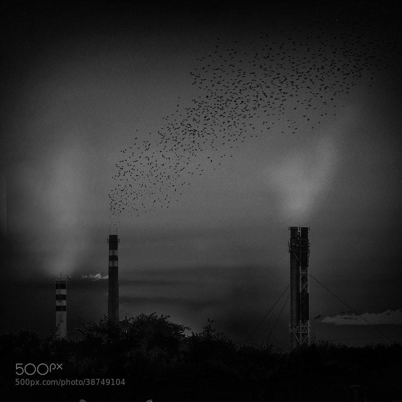Photograph smoke by Emese-durcka Laki on 500px