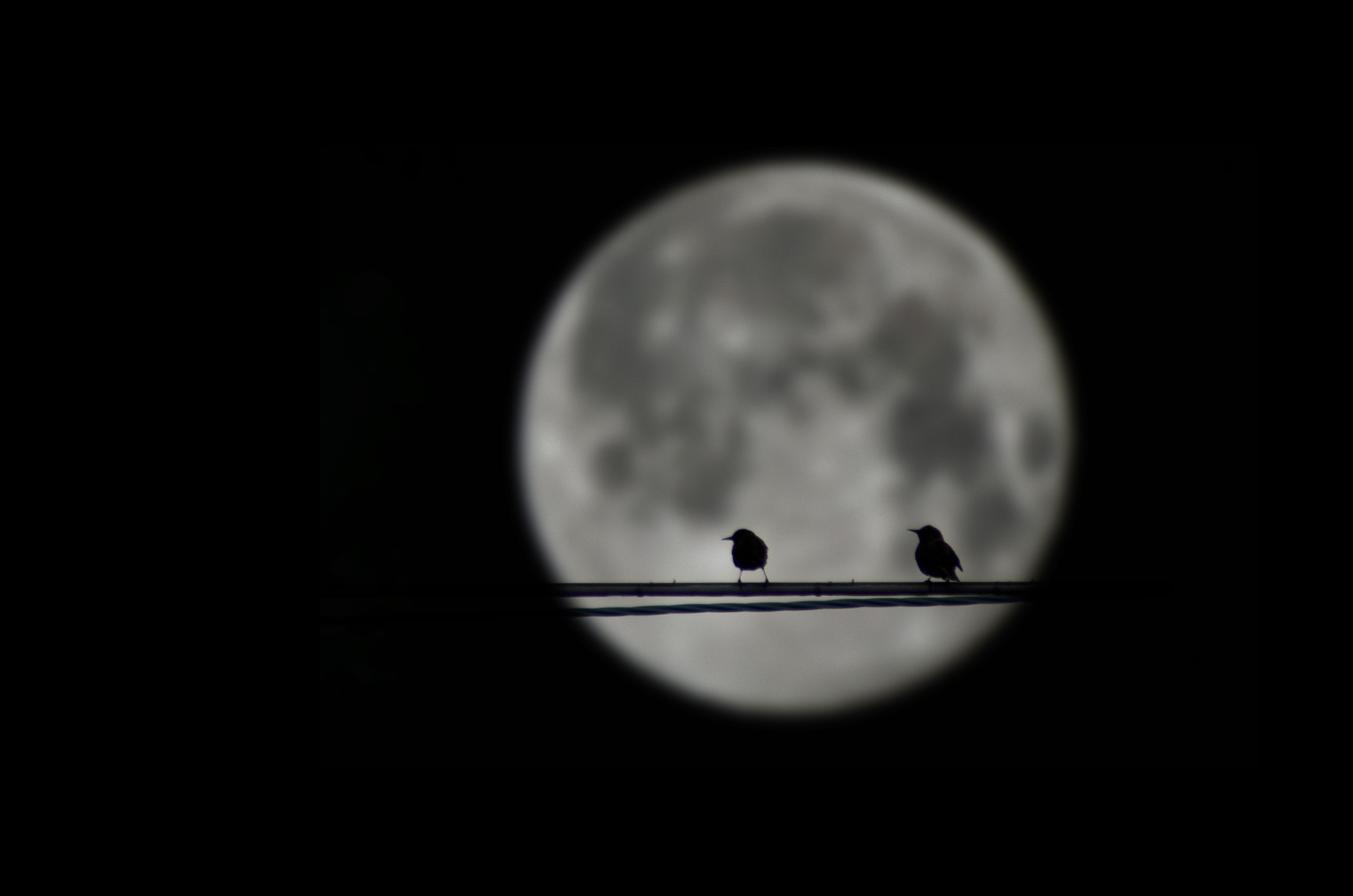 Photograph Alone in front of the moon by Marco Calandra on 500px