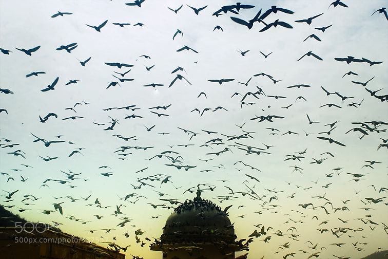 Photograph Pigeon sky. by Anna Vesna on 500px