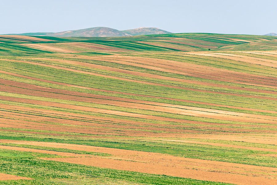 Photograph silky field by Hamed Rafi on 500px