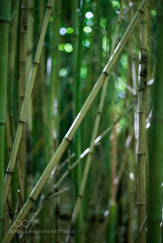 Photograph Bamboo /         -china fake- by Giovanni Cioli on 500px