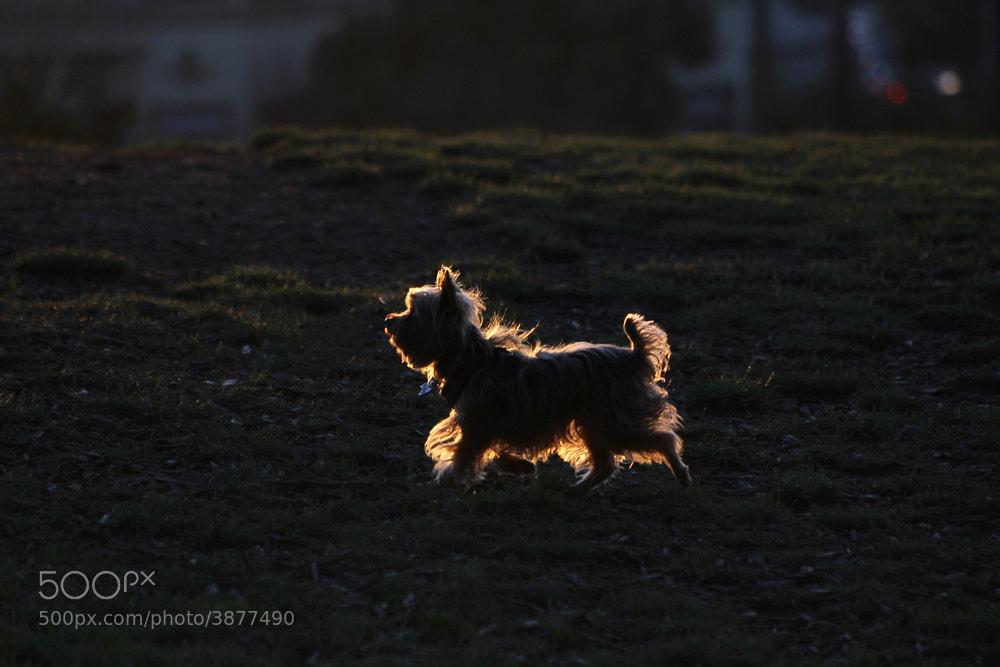 Photograph the evening light by Dara Pilyugina on 500px