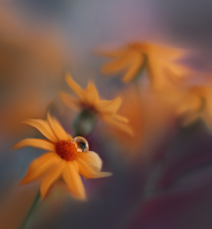 Photograph My Spring... by Juliana Nan on 500px