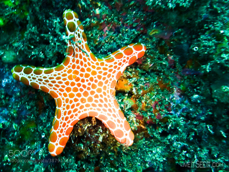 Photograph 365 Day 44. What a Star by Kyle  on 500px