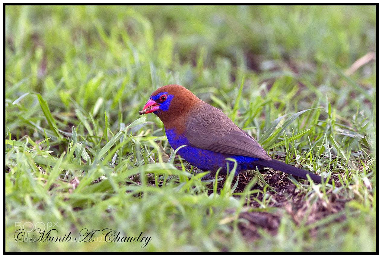 Photograph Colourful Beauty of Naivasha! by Munib Chaudry on 500px