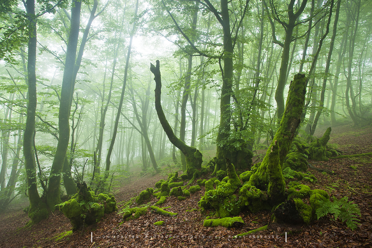 Photograph Life in green by Jontake . . on 500px