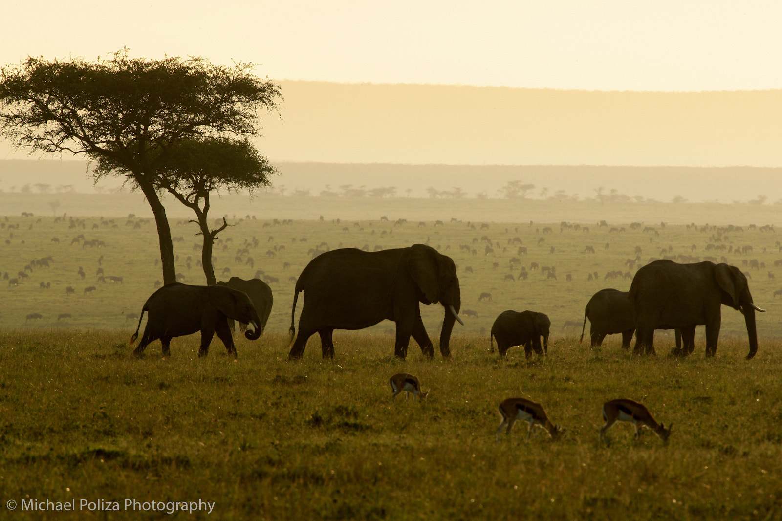 Photograph Elephants in Morning Mist by Michael Poliza on 500px
