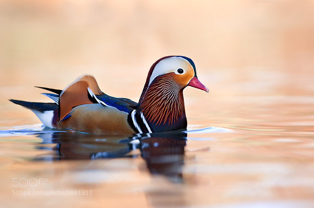 Photograph Color's fantasy by Stefano Ronchi on 500px