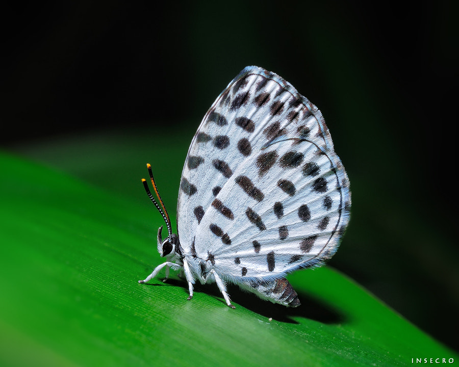 Photograph Forest pierrot by tae-hoon kim on 500px