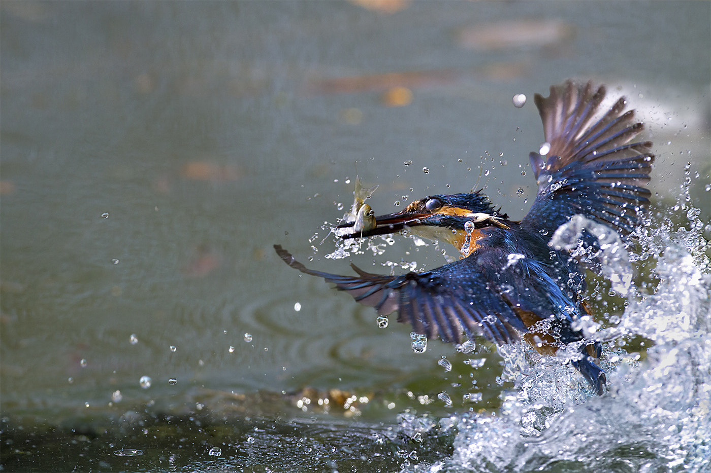 Photograph Phantom of the water by Marco Redaelli on 500px