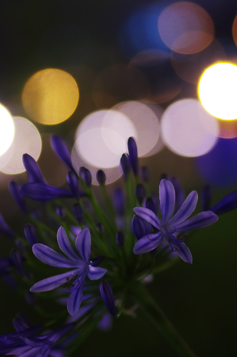 Photograph Flower of the night - Agapanthus - by Hideki Kawabata on 500px
