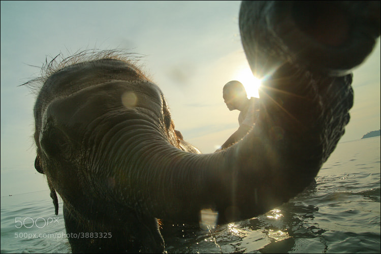 Photograph Bathing an elephant by Dmitry Berkut on 500px