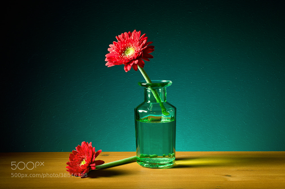 Photograph Gerbera by Dirk Stolz on 500px