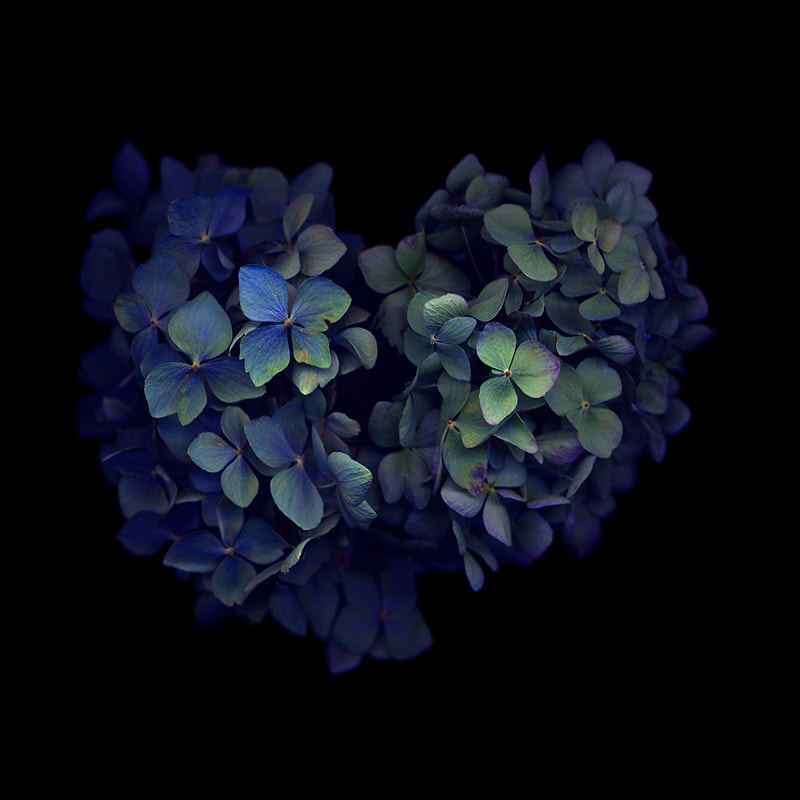 Photograph DEEP IN MY HEART... I AM BLUE...  by Magda Indigo on 500px