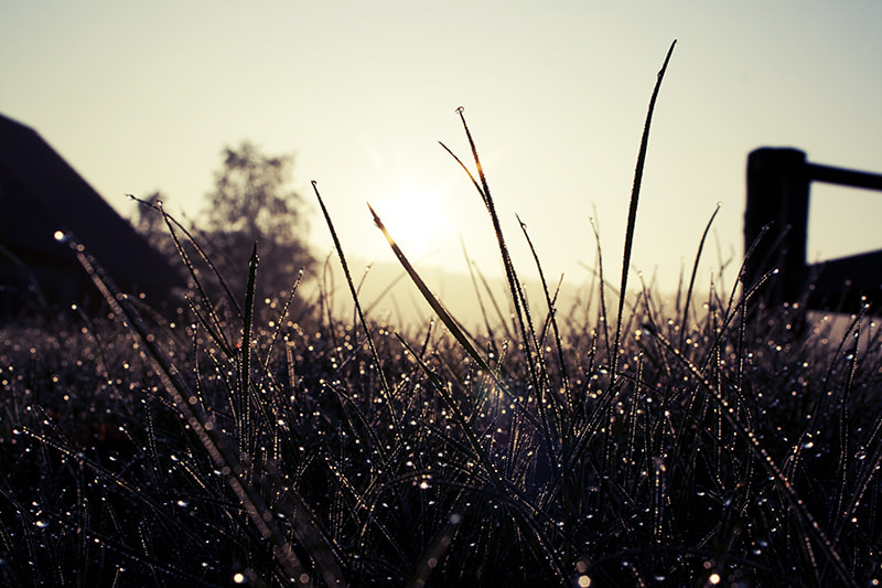 Photograph early morning dew by Katharina Franz on 500px