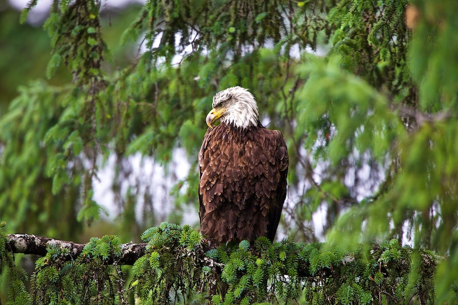 Photograph PawPaw II Eagle by Buck Shreck on 500px