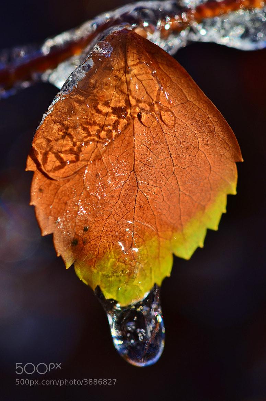 Photograph Freezing rain by Thibod . on 500px