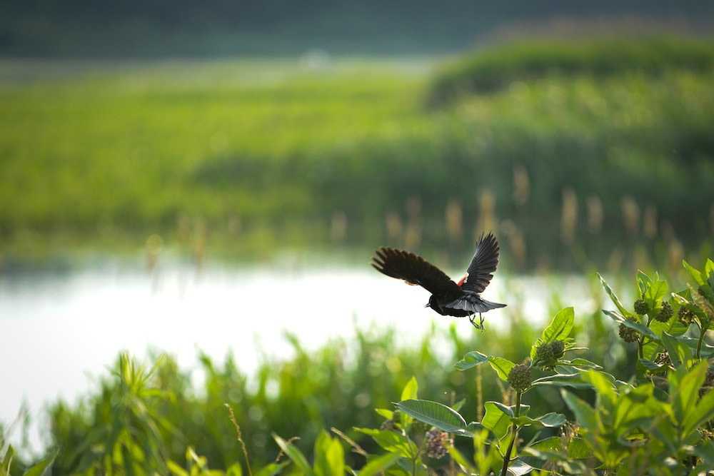 Photograph Fly Away by Azzam Alsudais on 500px