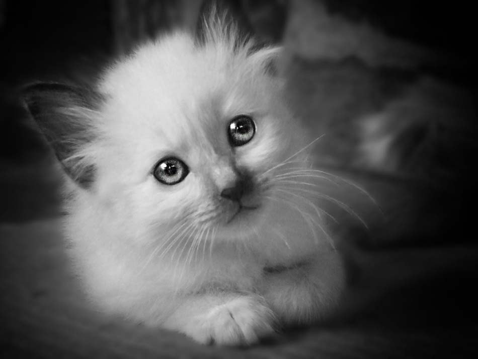 Photograph baby cat by White Cat on 500px