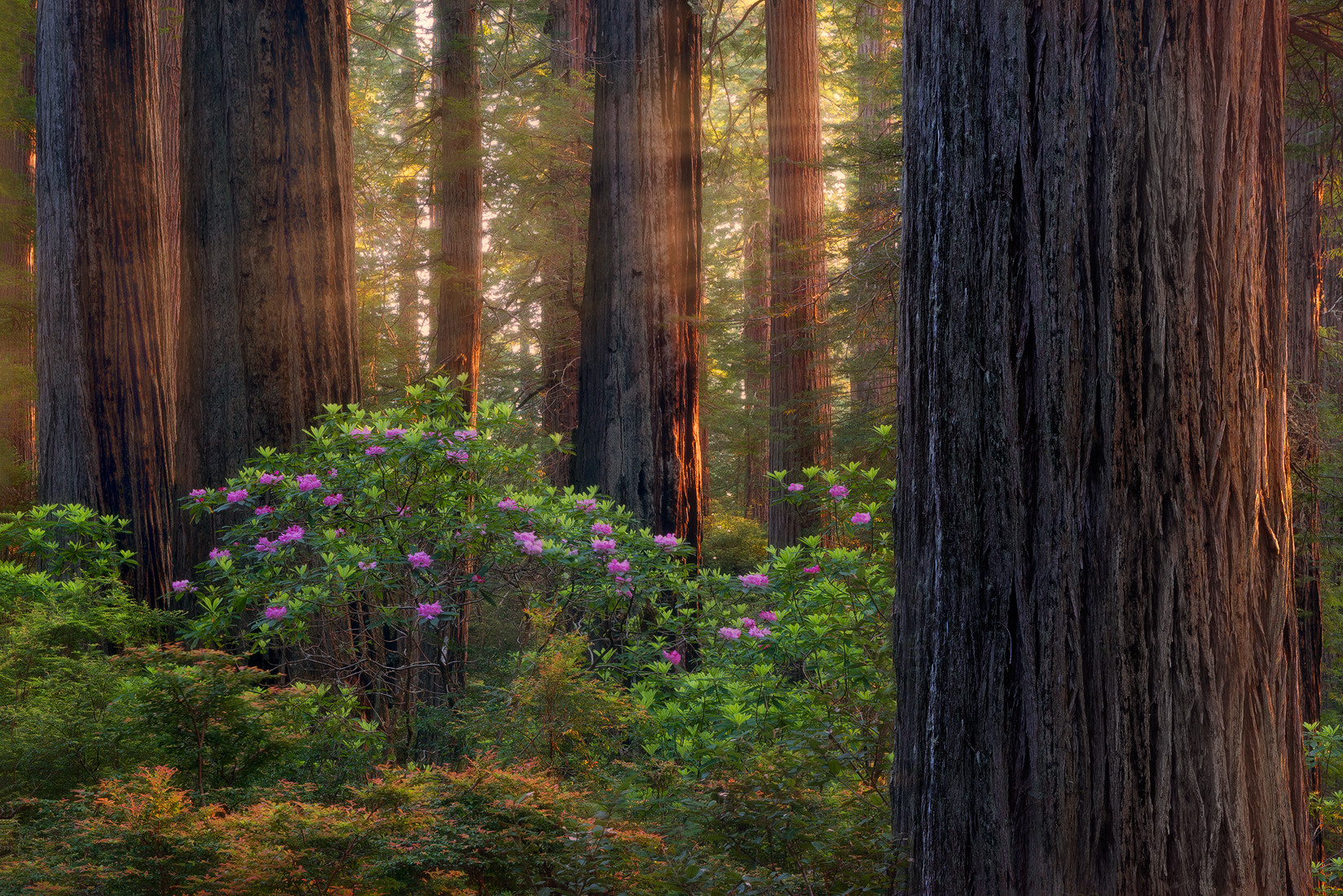 Photograph Relapse by Miles Morgan on 500px