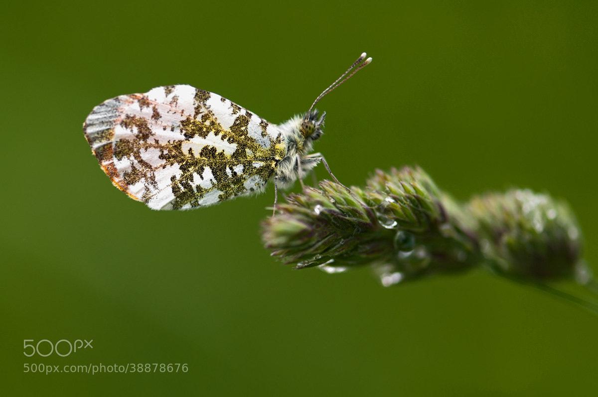 Photograph early butterfly  by Uta Naumann on 500px