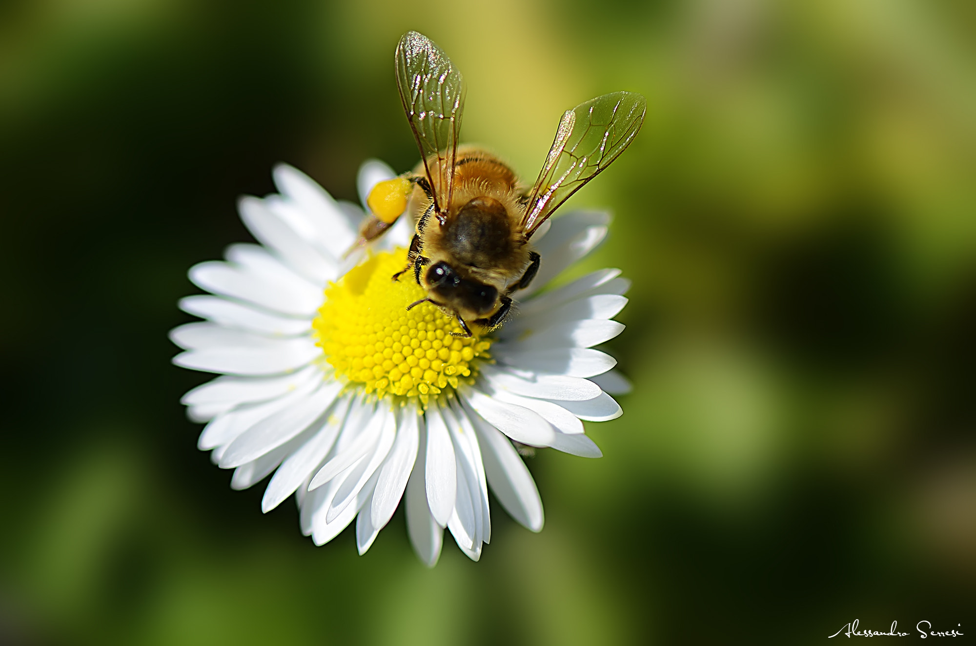 Photograph THE BEE by Alessandro Serresi on 500px