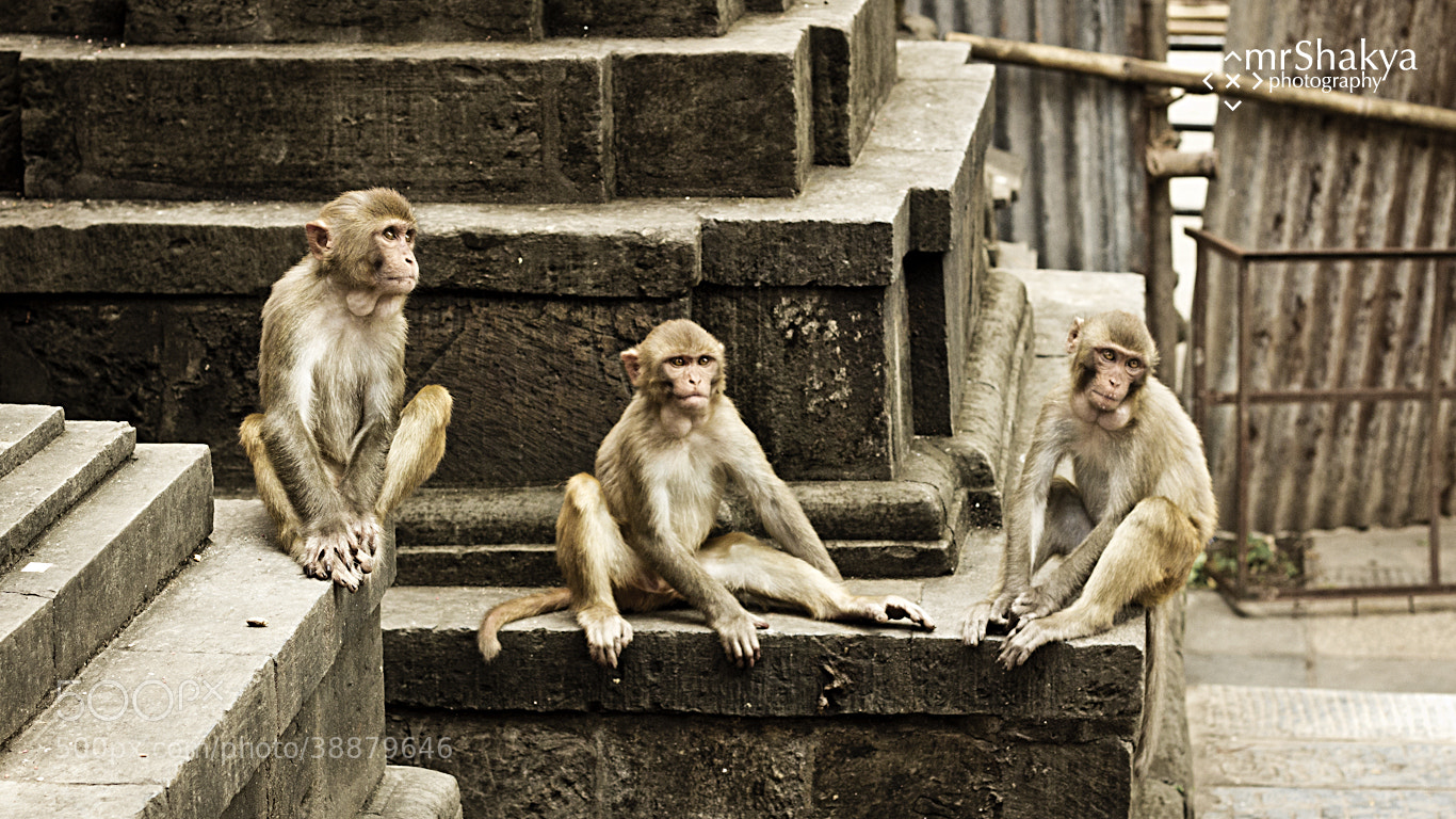Photograph The Gang by Manish Shakya on 500px