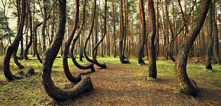 Dancing Trees by Kilian Schönberger on 500px.com