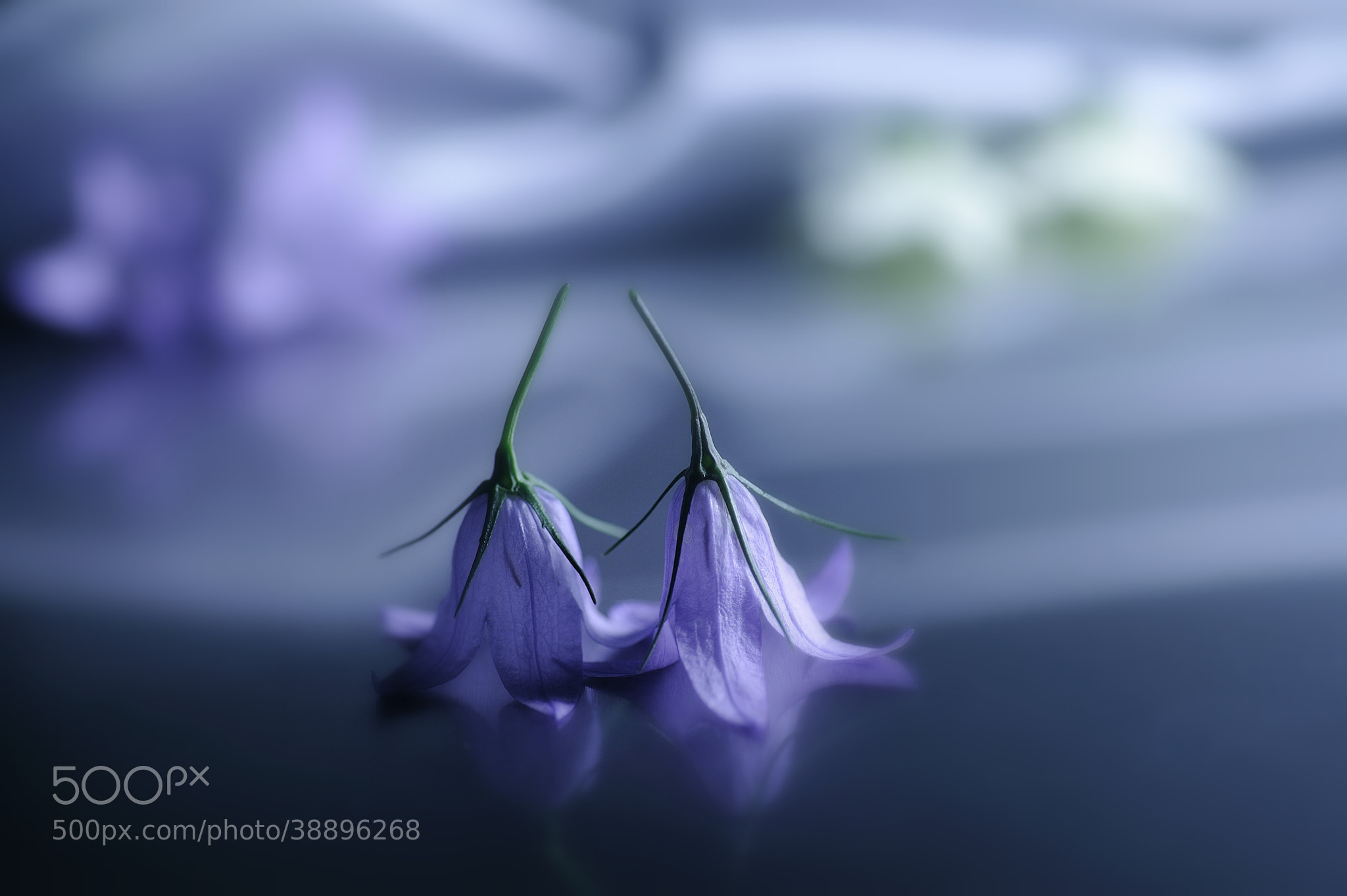 Photograph This Time the Dream's on Me by Lafugue Logos on 500px