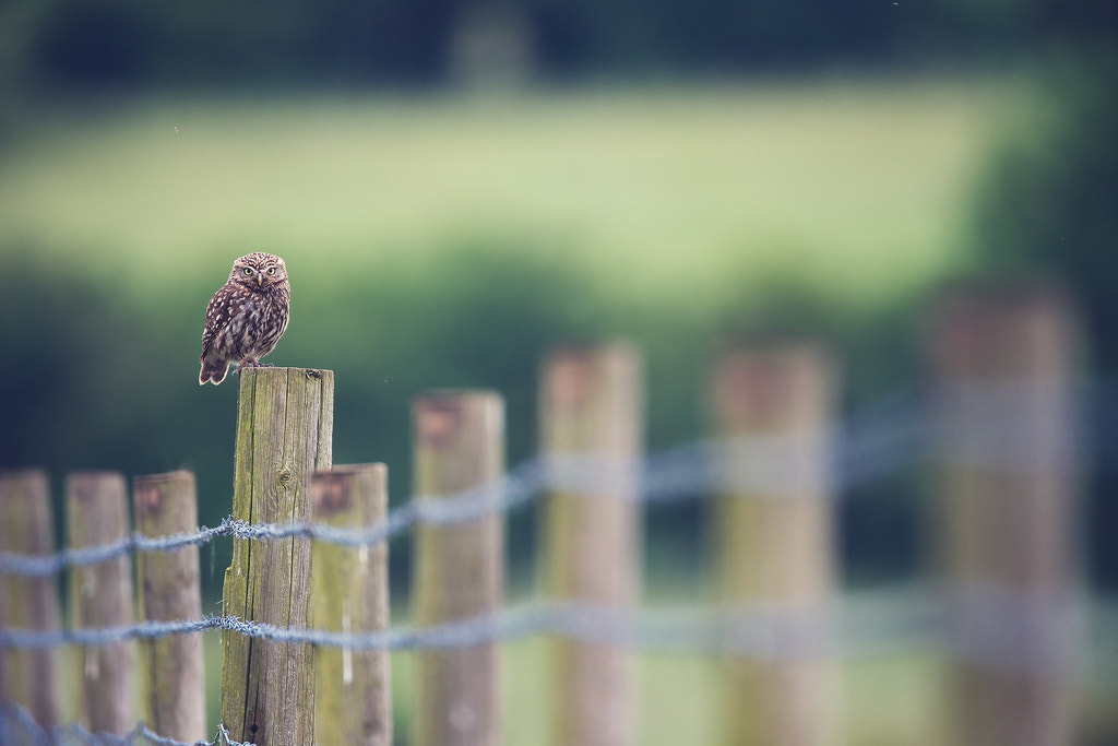 Photograph dof by Mark Bridger on 500px