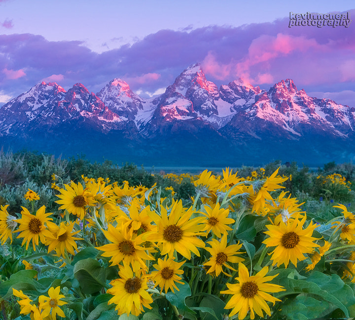 Photograph Grand Teton Wildflowers In Spring by Kevin McNeal on 500px