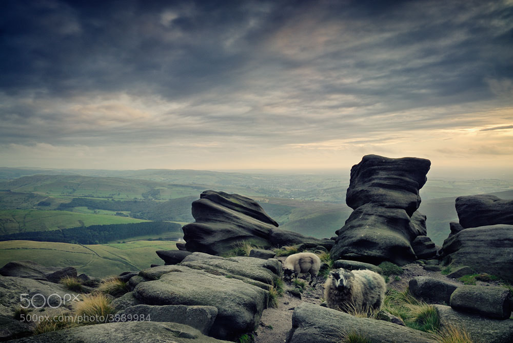 Photograph Sheep on Kinder Scout by Tony  on 500px
